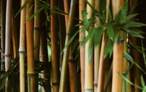 Bambus lang Foto von Maurits Bausenhart auf Unsplash.com