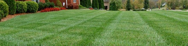 GreenLawn 1024x252 - Grass Seed Planting Guide