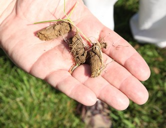 lawn plugs after aeration - Fall is the Time to Core Aerate & Overseed