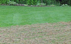 lawnthatch 300x188 - Do You Want a Healthy Lawn? Then Dethatch It