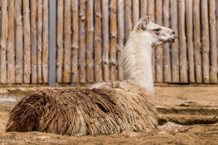 zoo-chisinau-2015-183