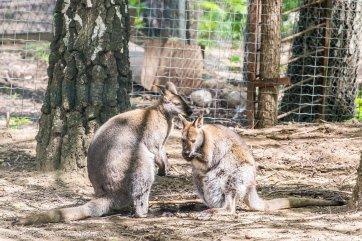 zoo-chisinau-2015-23