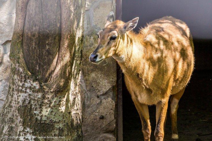zoo-chisinau-2015-83