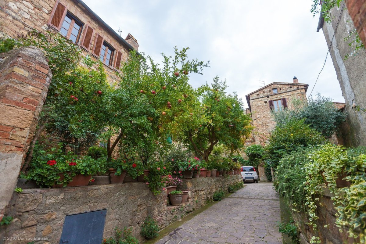 2016-pienza-siena-15-pomegranate-tree