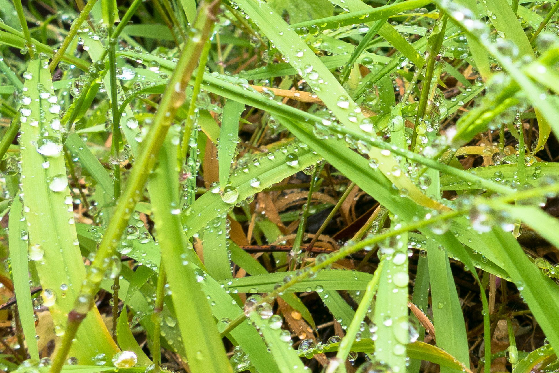 raindrops on blades of grass