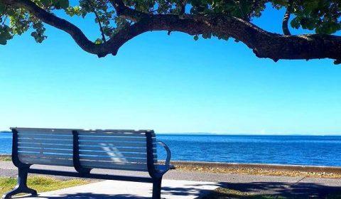sandgate bench by sea