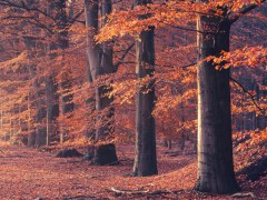 autumnal trees forest
