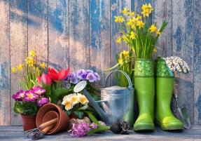 plants wellies