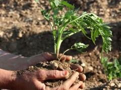 soil planting