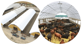 Cattle Feed Barns Testimonial