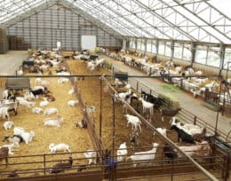 Goat Farming, Goat Barns and Goat Shelters build with Britespan Fabric Buildings