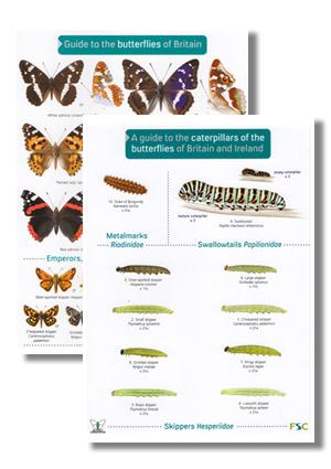 OP48-and-OP70-Butterflies-and-Caterpillars