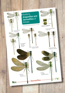 OP53b-Dragonflies