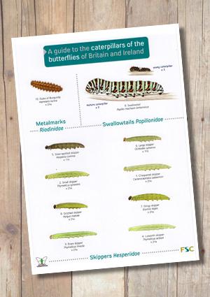 OP70b-CaterpillarsButterflies