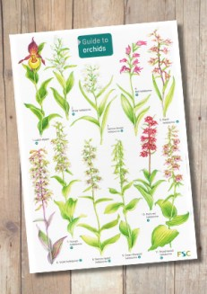 OP21b-Orchids