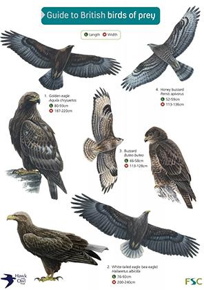 OP143 British Birds of Prey