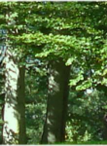 cropped-Copy-of-forest.png
