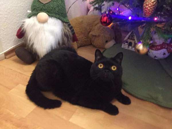питомник британских котов TAMAKY*RU в Москве| Новости ...