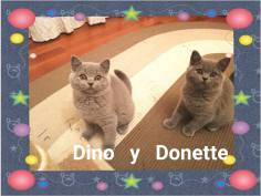 Dino y Donette