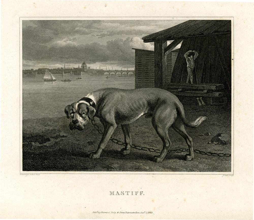 "A mastiff dog standing to left in a chained collar in a yard beside the Thames, a man working outside a building behind at right, bridge and the dome of St Paul's in the distance; illustration to ""The Sportsman's Repository, or a Correct Delineation of th"