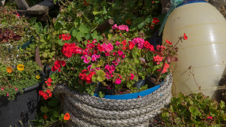 Quick ways to make your garden bloom this summer