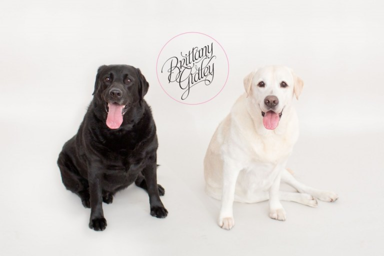 Studio Family Photographer | Dogs | Toddler | Family | Inspiration | Brittany Gidley Photography LLC