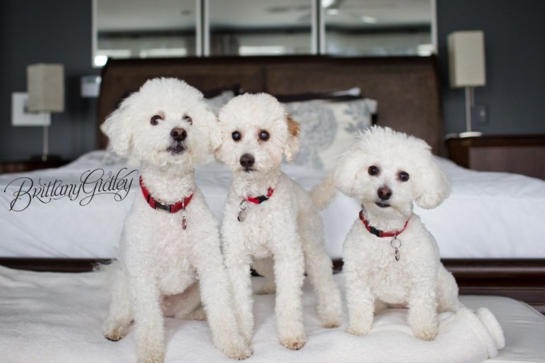 Lifestyle Pet Photography | Bay Village Ohio | Cleveland |Dogs | Adorable | Family