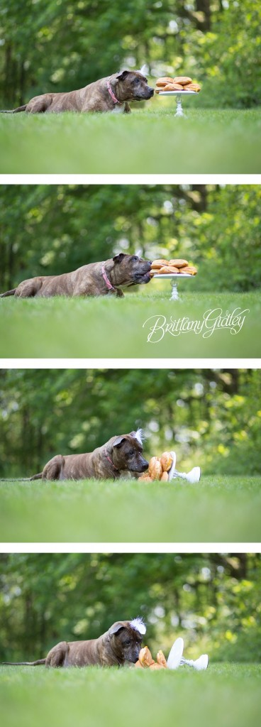 Joy | Celebrating Savannah | Pit Bull | Cleveland, Ohio | Brittany Gidley Photography LLC