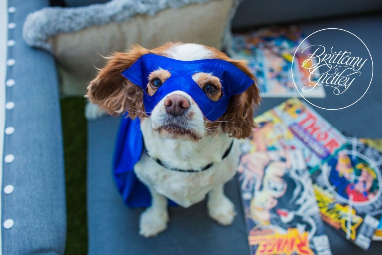 Cavalier King Charles Spaniel | Downtown Cleveland | Brittany Gidley Photography LLC | Avengers Photo Shoot
