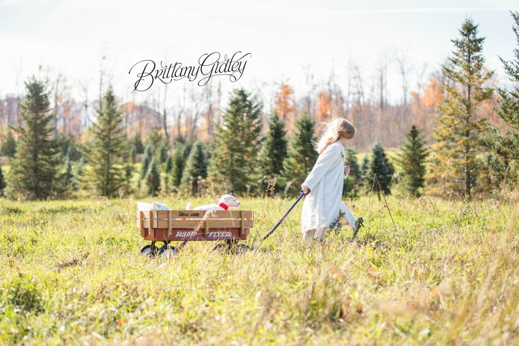 Tree Farm Dream Mini Sessions-24