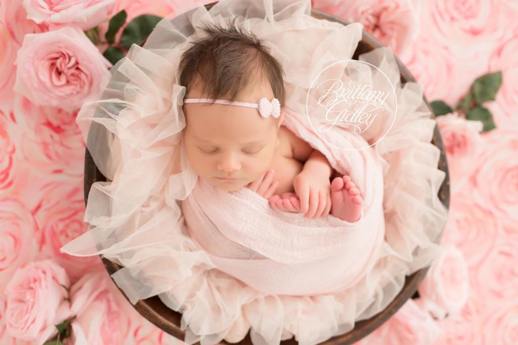 Newborn Dream Session | Introducing Angelina