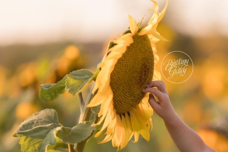Child Photographer | Sunflower Field