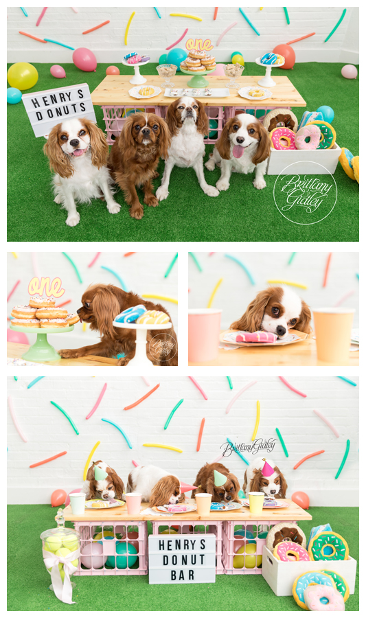 Doggy Donut Dream Session Donut First Birthday Party for Dogs