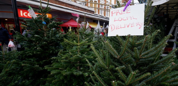 Where to buy a real Christmas tree in Brixton & surrounding area ...