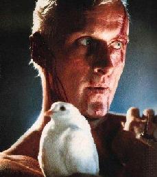 Ho visto anche un uomo con la testa rotta ed un piccione in mano, ma voi umani manco ve lo potete immaginare!