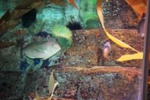 HD Zoo Aquarium 09
