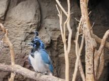 HD Zoo Desert Dome 07
