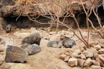 HD Zoo Desert Dome 27
