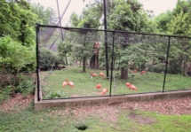 HD Zoo Train 10