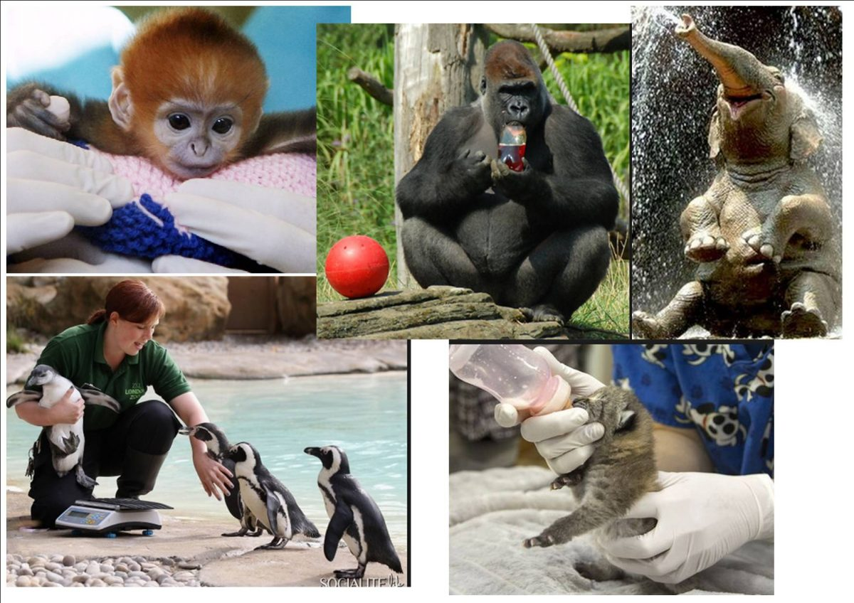 an argument against keeping animals in zoos Zoos if you are against them: thesis statement are zoos  a persuasive essay on why zoos  is right or wrong to keep animals in public zoos,.