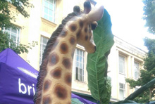 giraffe 220 x 148