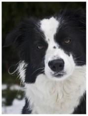 17 12 2011 – Der erste Schnee: Spaziergang am Knoten