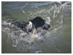 22|08|2011 – Die perfekte Welle (3. Versuch)