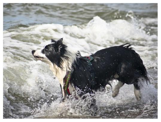 25 08 2011 – Seehunde (I)