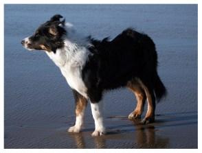 22|11|2009 – Steife Brise beim Strandurlaub