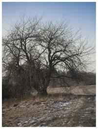 01|02|2012 – Wer kann, der duckt sich vor dem Wind …