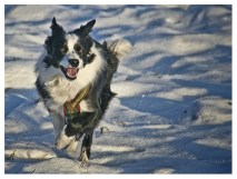 04|02|2012 – No, it's Nell running again!
