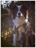 17|03|2012 – Kuckuck, ruft's aus dem Wald …