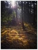 17|03|2012 – Lichtung im Wald
