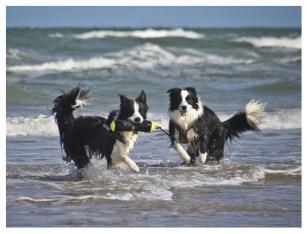 07|05|2012 – Seehunde